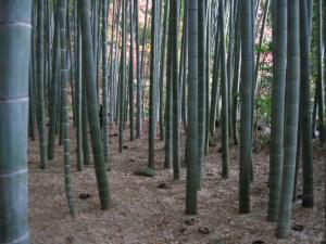 bamboo my friends; bamboo!