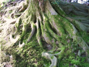serious roots