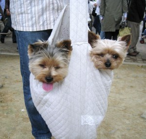 Dogs in a Bag