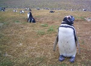 somewhere in Argentina 2006