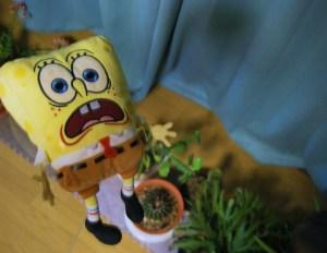 I'm a sponge! Why am I screaming?