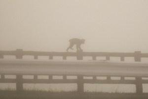 Forget Dian Fossey! ... there are monkeys in the mist too!